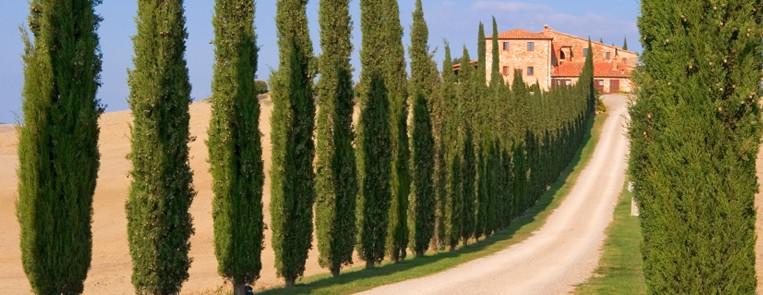 tuscany_italy_cipress_road_bgl